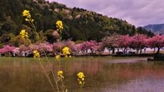 湖北の春景