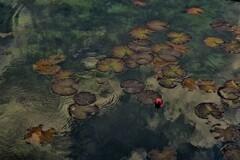 名もなき池 4