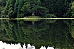 岩尾池一本杉 3