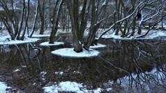 小さな森の水辺の冬物語 3
