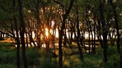湖辺の小さな森の夕景 1