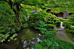 新緑の湖東三山金剛輪寺 14