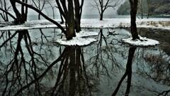 小さな森の水辺の冬物語 5