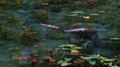 モネの池 1