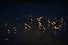 水辺のシラサギ 3-2