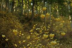 春薫妖精の森 5