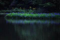 平池の初夏の水辺 3
