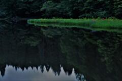 平池の初夏の水辺 9