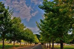 銀杏並木秋景 3