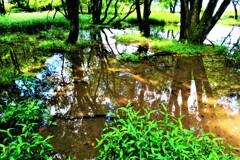 水辺の小さな森