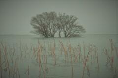黄沙の水中木 1