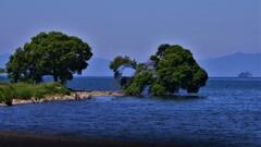 湖辺の新緑