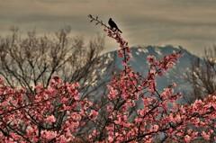 春よ遠き春よ