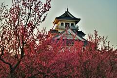 長浜城梅景