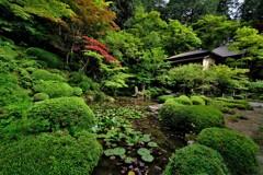 新緑の湖東三山金剛輪寺 10