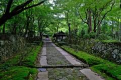 新緑の湖東三山金剛輪寺 2