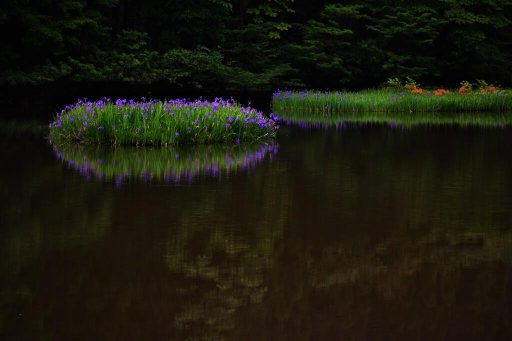 平池の初夏の水辺 2