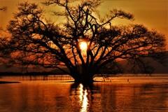 水中木の夕日