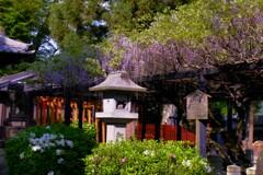 彦根松原・春日神社 3