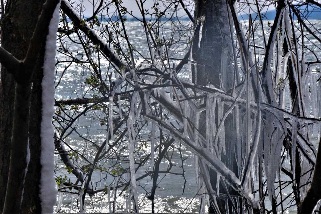 しぶき樹氷 6