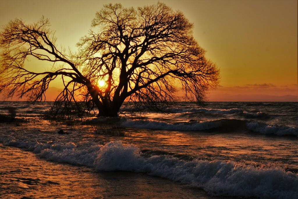 波打ち夕木
