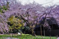 井伊神社 5