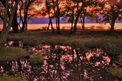 湖辺の小さな森の夕景 5