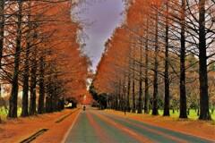師走のマキノメタセコイア並木道 11