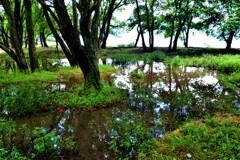 湖辺の小さな湿原