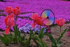 地上の春 2