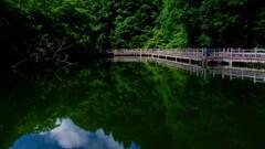 深緑のもみじ池 3-1