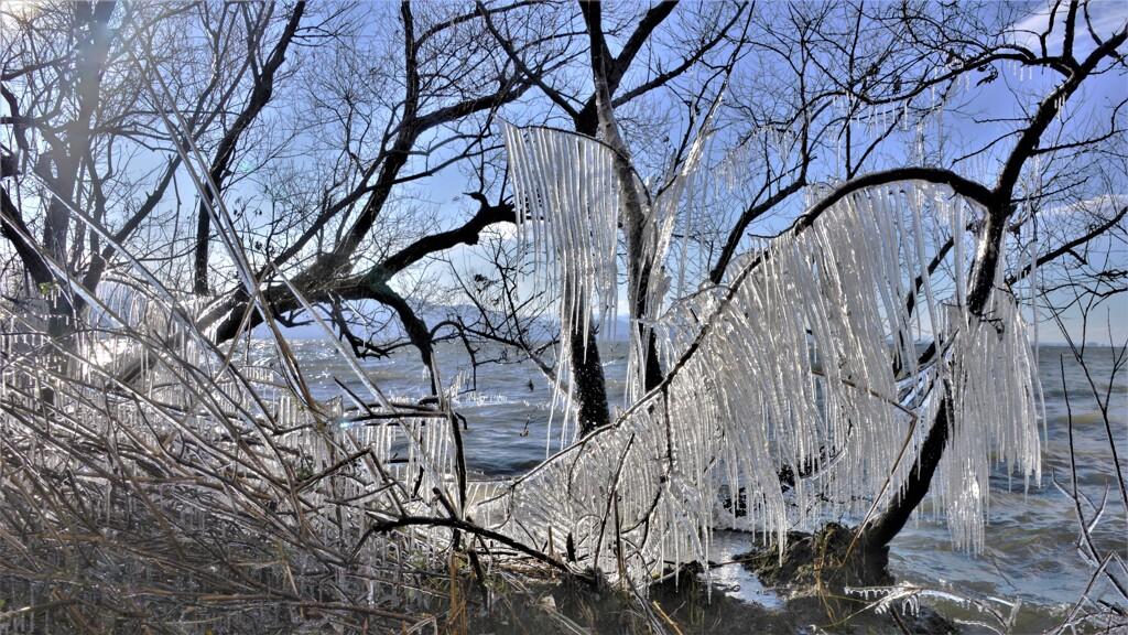 湖辺の氷柱 1