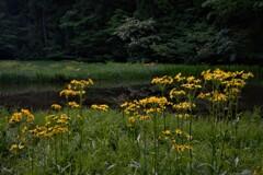 平池の初夏の水辺 6