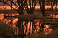 湖辺の小さな森の夕景 4