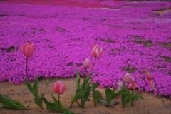 地上の春 4