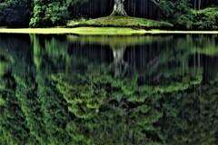 水鏡の千年杉 4