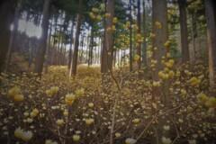 春薫妖精の森 10