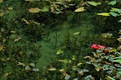 モネの池 4