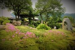 梅雨間の全長寺山門
