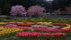 春咲く山間の花