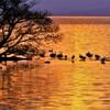 冬琵琶湖夕まぐれ Ⅴ