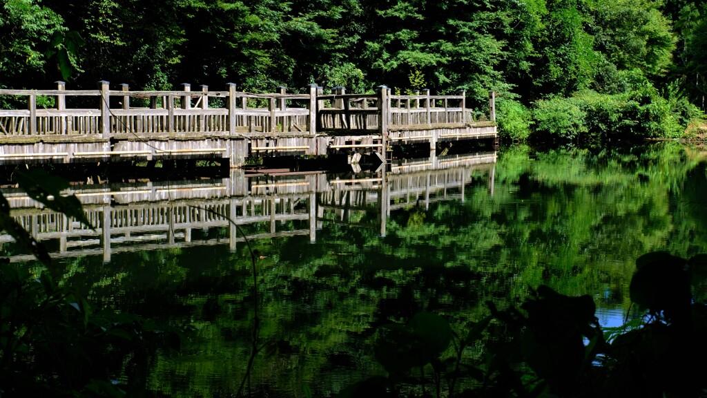 深緑のもみじ池 3-3