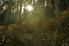 春薫妖精の森 9