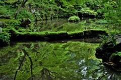 新緑の湖東三山金剛輪寺 16