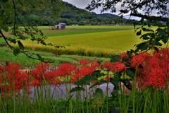 秋風景 1