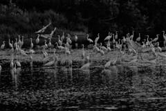 水辺のシラサギ 3-3