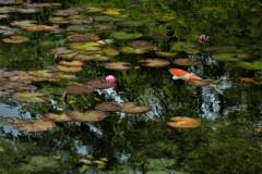 モネの池 6