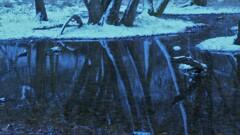 小さな森の水辺の冬物語 4