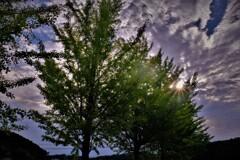 銀杏並木秋景 4