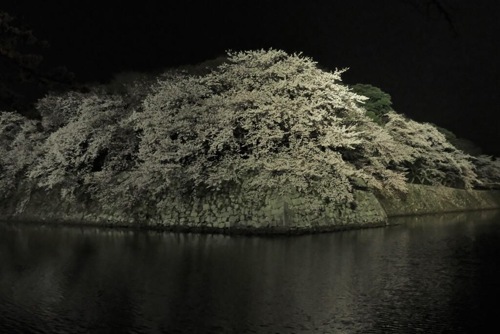 彦根城濠端夜景 1
